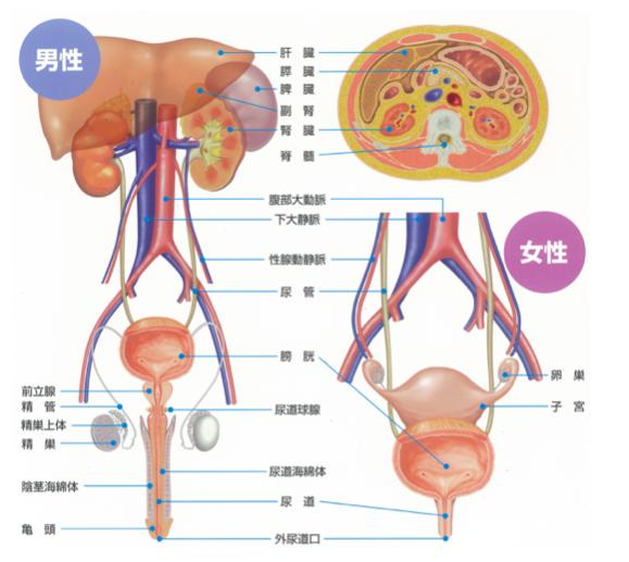 複雑 性 尿 路 感染 症